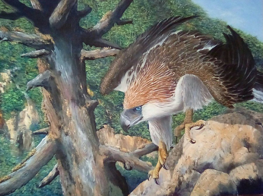 Haribon, the Great Philippine Eagle