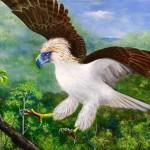 philippine eagle 960x748px